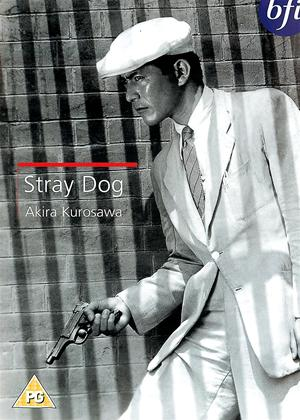 Stray Dog Online DVD Rental