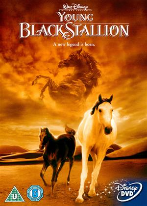 Young Black Stallion Online DVD Rental