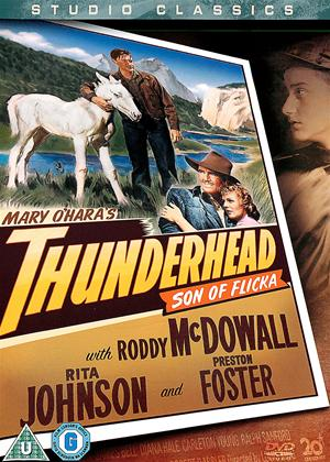 Thunderhead Son of Flicka Online DVD Rental