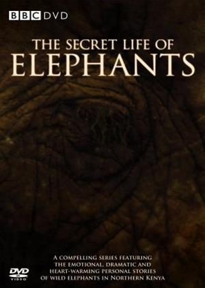 Rent Secret Life of Elephants Online DVD Rental