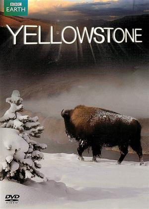 Rent Yellowstone Online DVD Rental