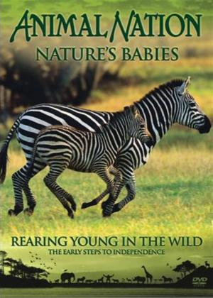 Animal Nation: Nature Babies: Rearing Young in the Wild Online DVD Rental