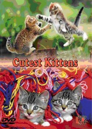 Rent Cutest Kittens Online DVD Rental