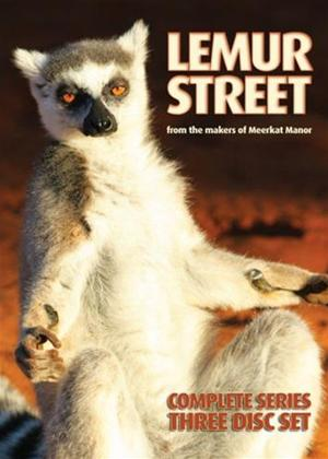 Rent Lemur Street: Complete Series Online DVD Rental