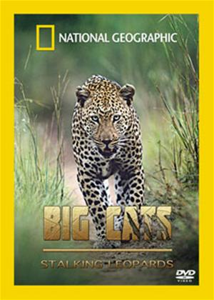 Rent Big Cats: Stalking Leopards Online DVD Rental