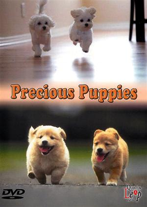 Precious Puppies Online DVD Rental