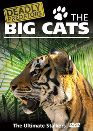 Deadly Predators: The Big Cats Online DVD Rental