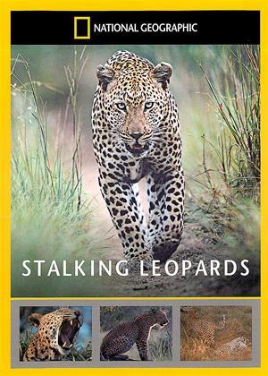 Rent National Geographic: Stalking Leopards Online DVD Rental