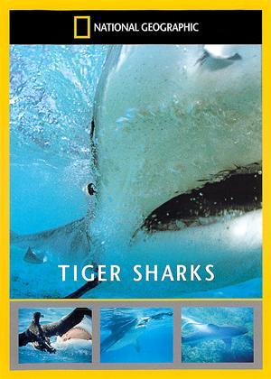 Rent National Geographic: Tiger Sharks Online DVD Rental
