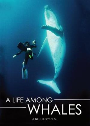 A Life Among Whales Online DVD Rental