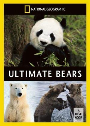 Rent National Geographic: Ultimate Bears Online DVD Rental