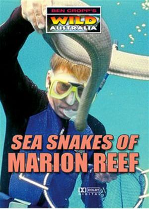 Rent Sea Snakes of Marion Reef Online DVD Rental