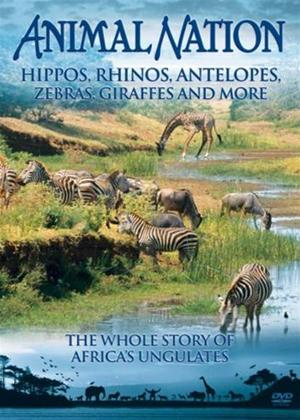 Rent Animal Nation: Hippos, Rhinos, Antelopes, Zebras, Giraffes and More Online DVD Rental