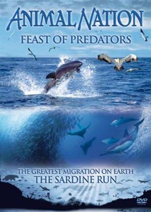 Rent Animal Nation: Feast of Predators Online DVD Rental