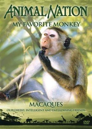 Animal Nation: My Favourite Monkey Online DVD Rental
