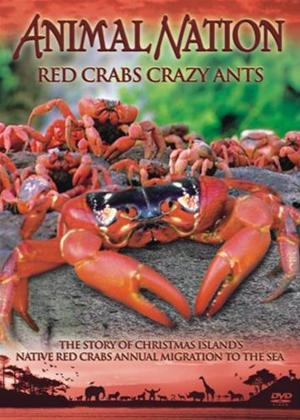 Animal Nation: Red Crabs Crazy Ants Online DVD Rental