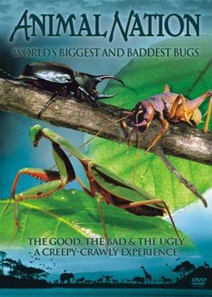 Animal Nation: World's Biggest Bugs Online DVD Rental