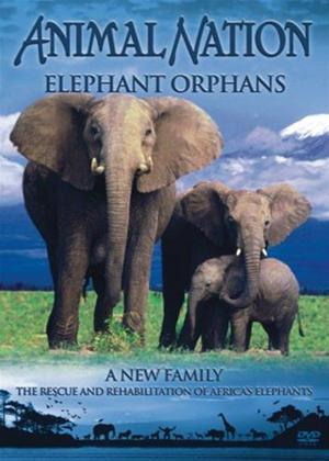 Animal Nation: Elephant Orphans Online DVD Rental