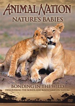 Rent Animal Nation: Nature Babies: Bonding in the Wild Online DVD Rental