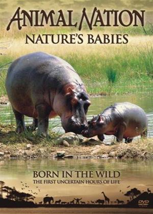 Rent Animal Nation: Nature Babies: Born in the Wild Online DVD Rental