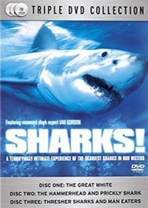 Sharks! Online DVD Rental