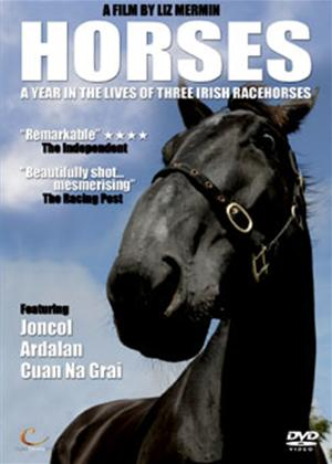 Rent Horses: A Year in the Lives of Three Irish Racehorses Online DVD Rental