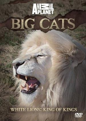 Big Cats: White Lions: King of Kings Online DVD Rental