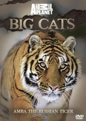 Rent Animal Planet: Big Cats Amba the Russian Tiger Online DVD Rental