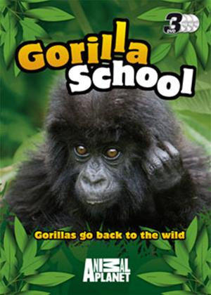 Gorilla School Online DVD Rental