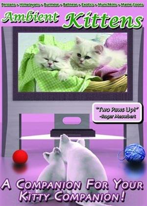 Rent Ambient Kittens Online DVD Rental