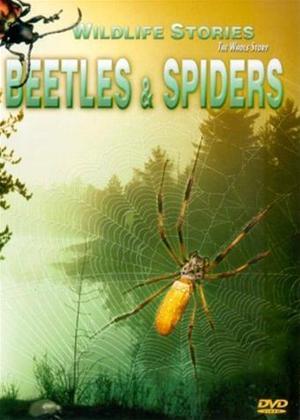 Rent Whole Story: Beetles/Spiders Online DVD Rental