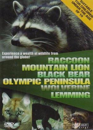 Wildlife: Racoon Mountain Online DVD Rental