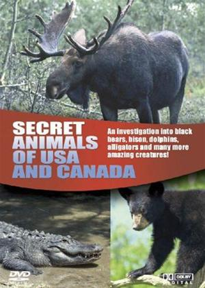 Wildlife: Secret Animals Usa Online DVD Rental