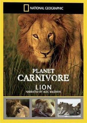 Rent National Geographic Planet Carnivore: Lion Online DVD Rental