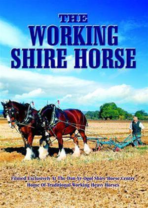 The Working Shire Horse Online DVD Rental