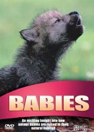 Wildlife: Babies Online DVD Rental