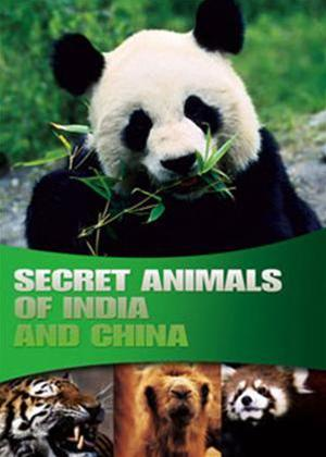Wildlife: Secret Animals of India and China Online DVD Rental