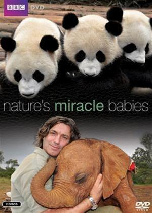 Rent Nature's Miracle Babies Online DVD Rental