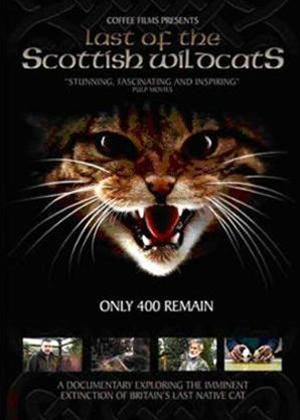 Last of the Scottish Wildcats Online DVD Rental