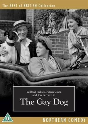 The Gay Dog Online DVD Rental