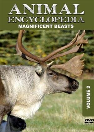 Rent Animal Encyclopedia: Vol.2: Magnificent Beasts Online DVD Rental