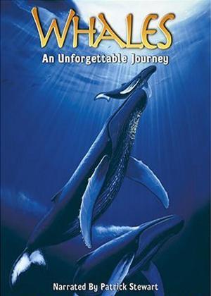 Rent Whales: An Unforgettable Journey Online DVD Rental