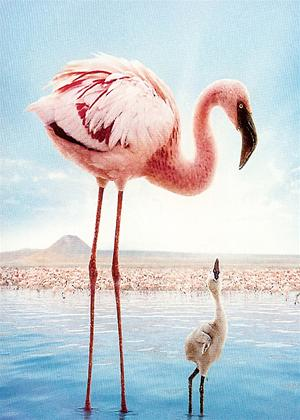The Crimson Wing: Mystery of the Flamingos Online DVD Rental