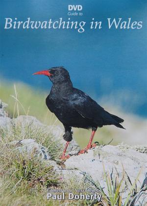 Birdwatching in Wales Online DVD Rental