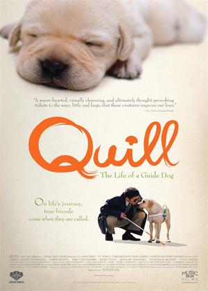 Rent Quill: The Life of a Guide Dog Online DVD Rental