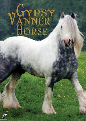 Gypsy Vanner Horse Online DVD Rental