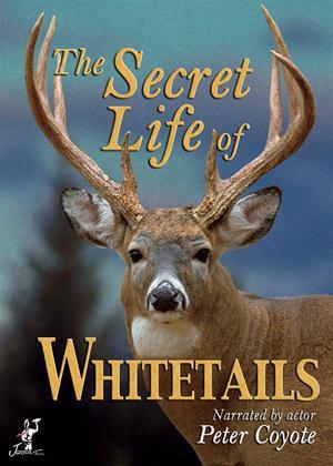 Rent The Secret Life of Whitetail Deer Online DVD Rental