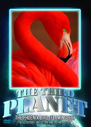 The Third Planet: The Phoenix Bird (Flamingoes) Online DVD Rental