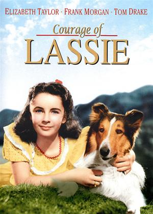 Courage of Lassie Online DVD Rental