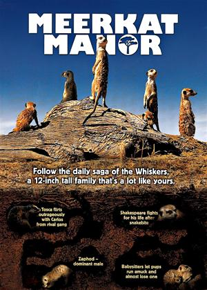 Meerkat Manor Online DVD Rental